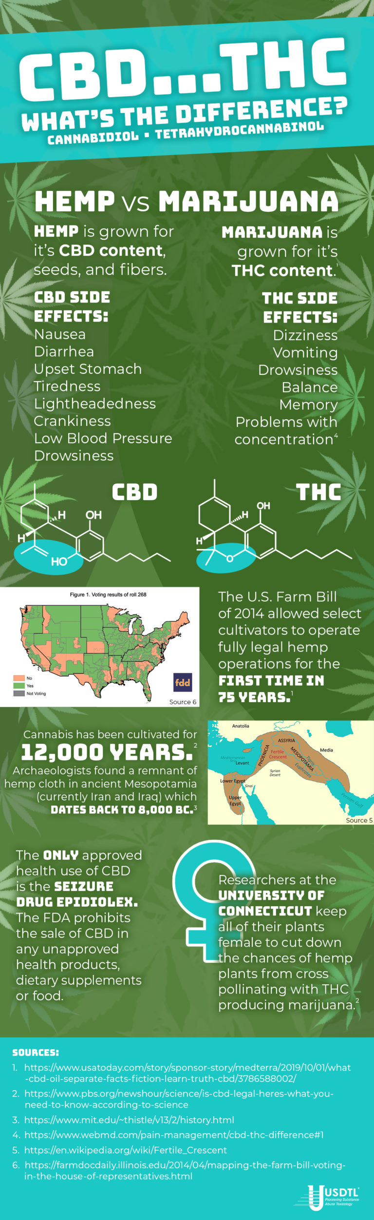 CBD…THC – What's the Difference?